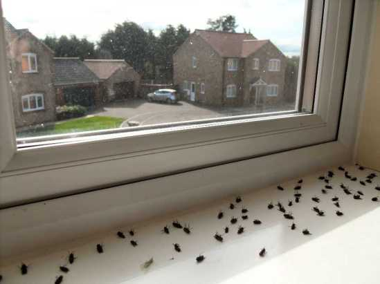 Dead-flies-in-the-window