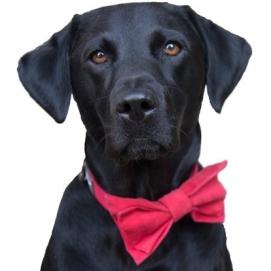 FOI DOGGY DOG