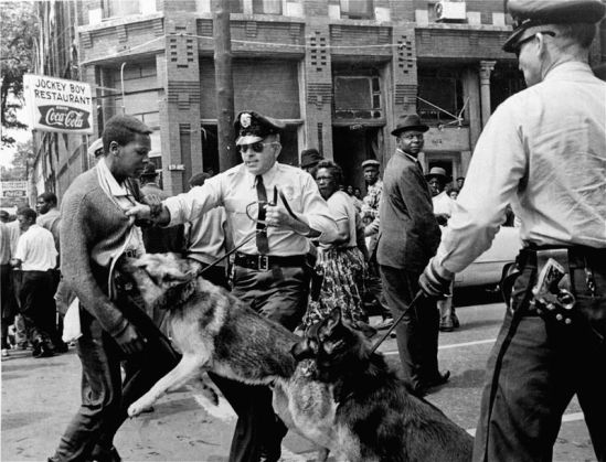 DEMOCRAT DOGS